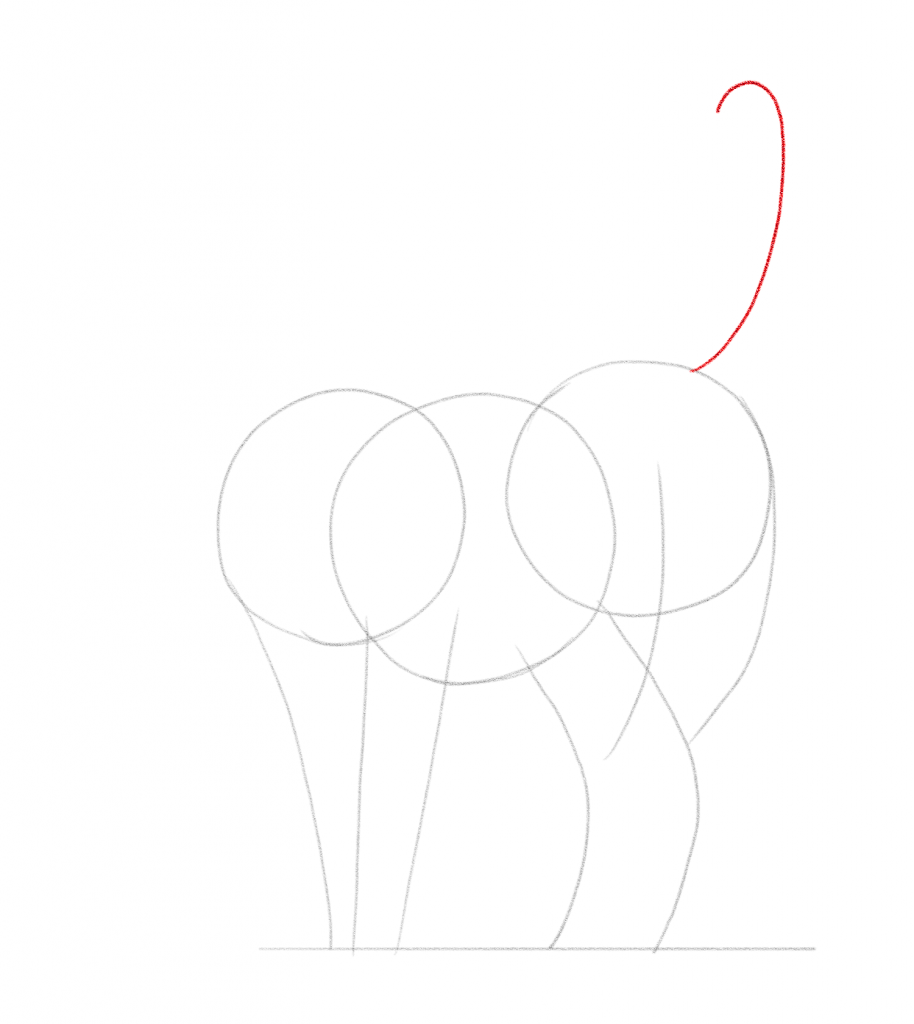 Draw a curved line for the tail