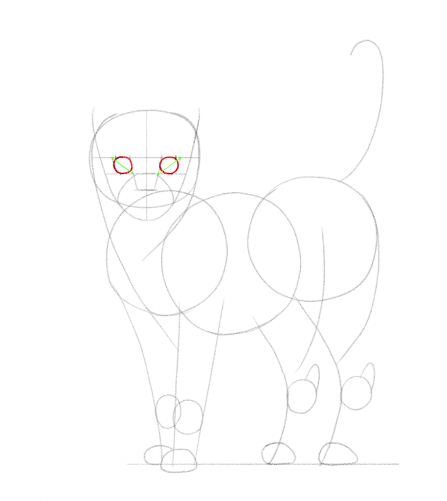 Sketch the cat's eyes