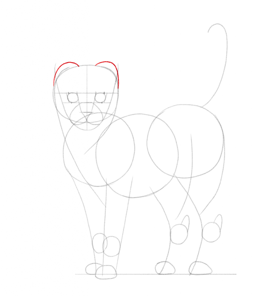 Draw 2 rounded lines to outline the cat's ears