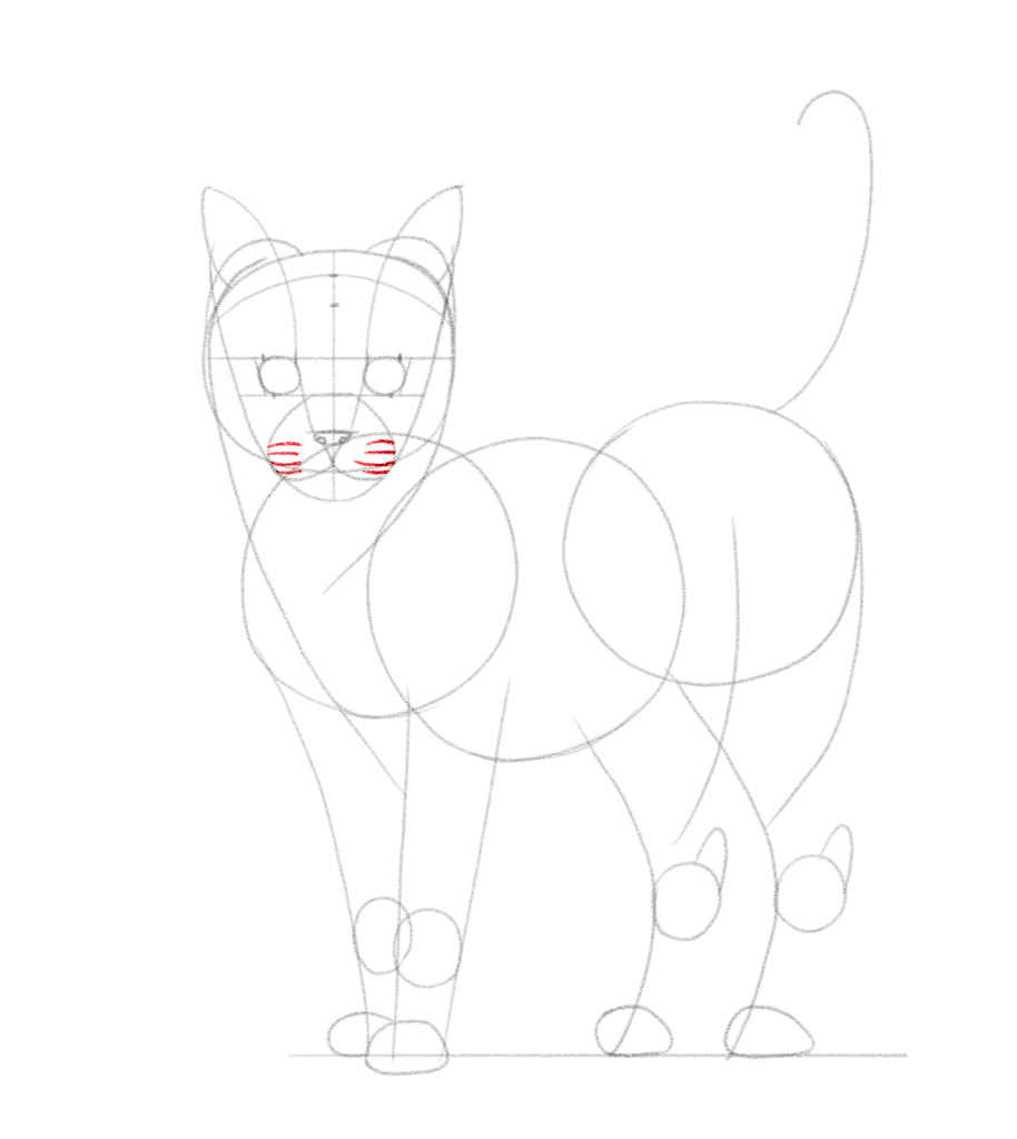 Draw lines for the whiskers