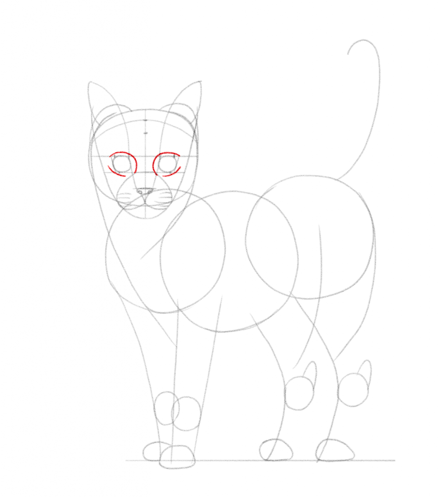 Draw curved lines around the eyes