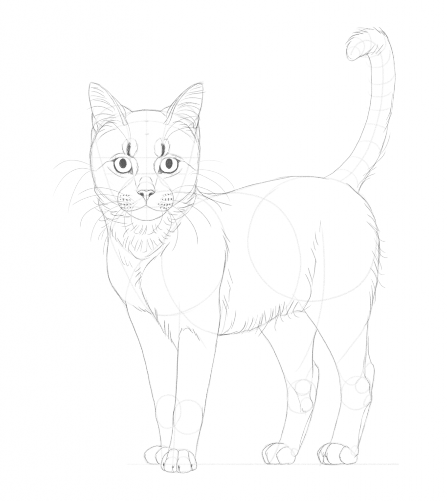 Add the whiskers and more fur