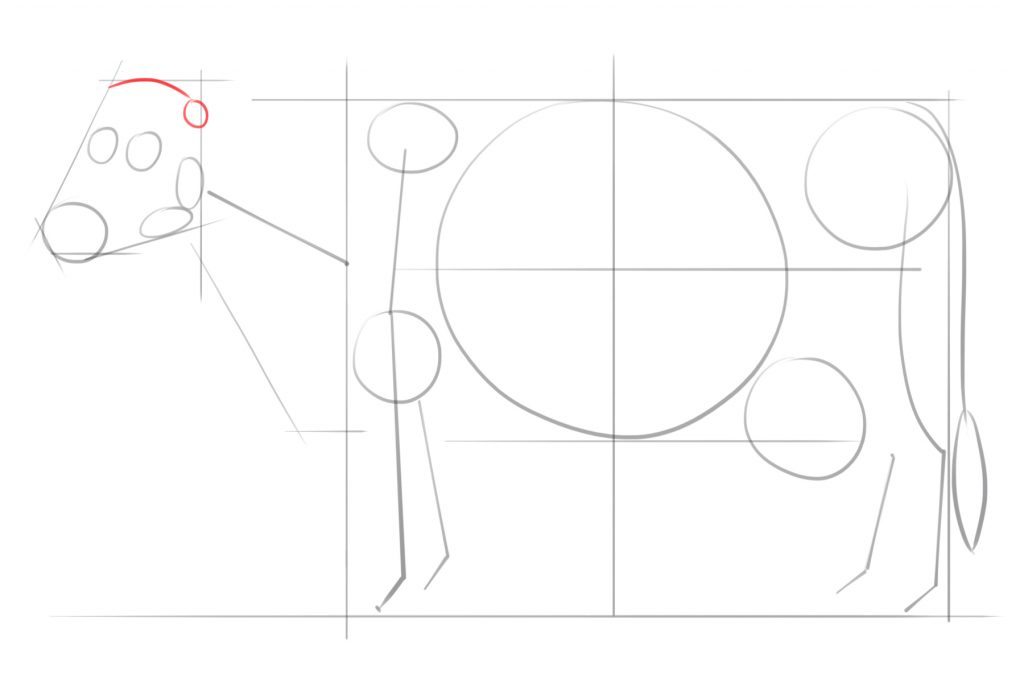 Draw A Slightly Curved Line for the Upper Portion