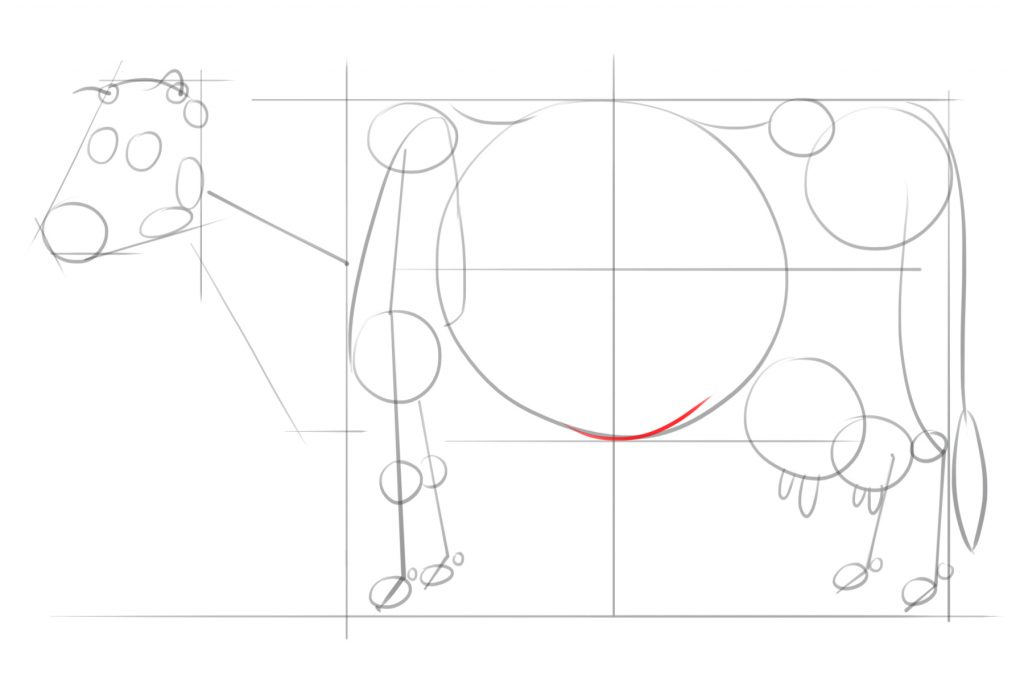 Short Curved Line For The Undercarriage Of The Cow's Belly