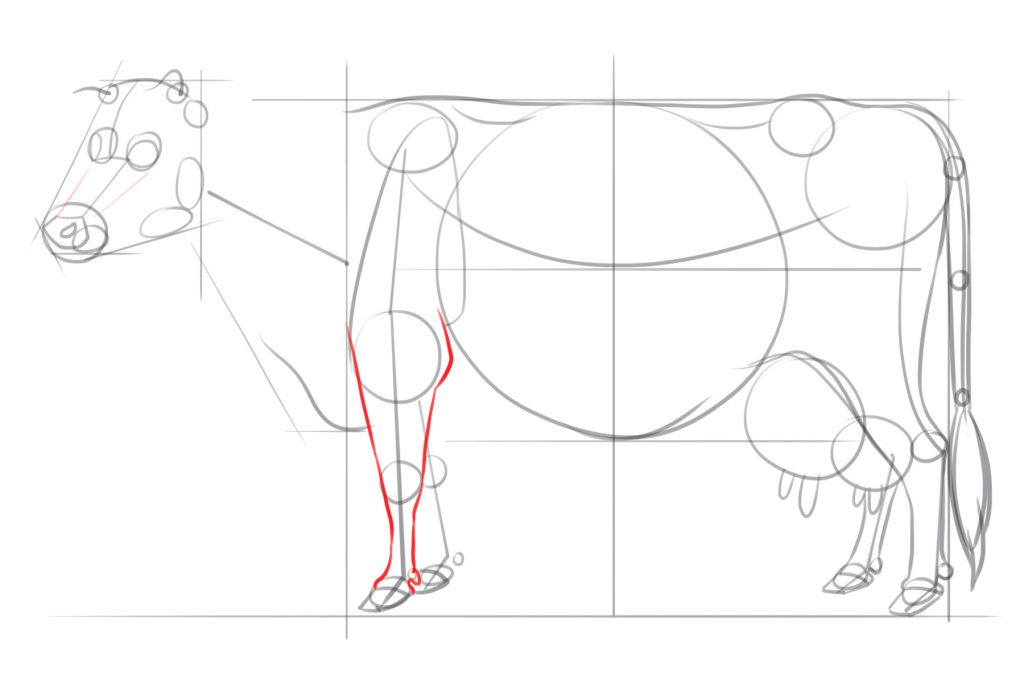 Repeat Step for the Front Leg