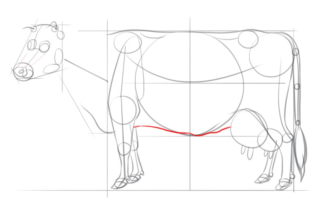 Draw The Underside of the Belly