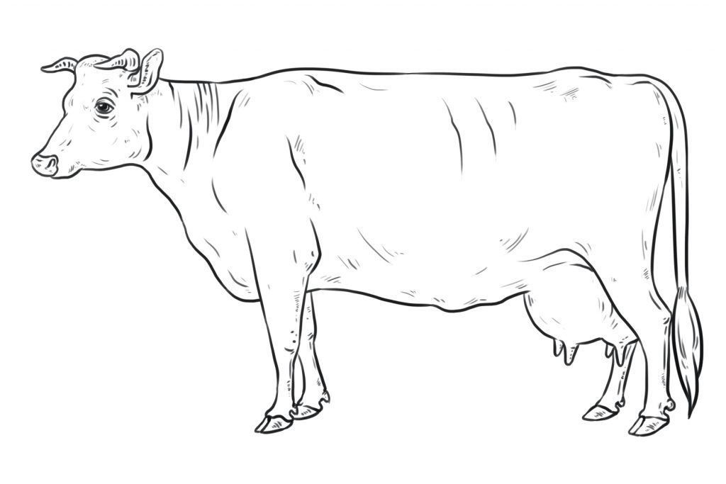 A Complete Drawing of a Realistic Cow