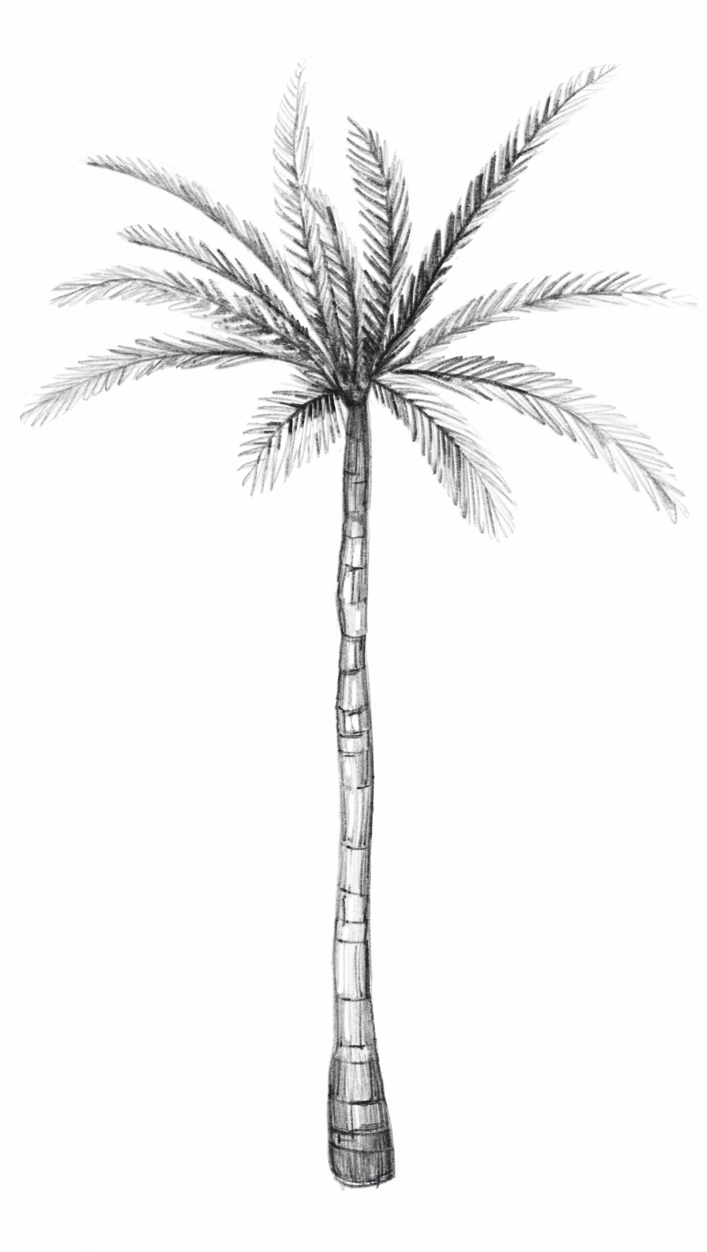 The Palm Tree You'll Be Drawing