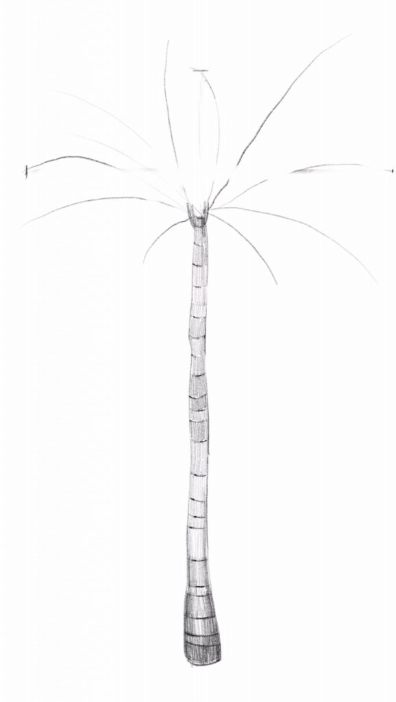 Draw the outline of your palm leaves