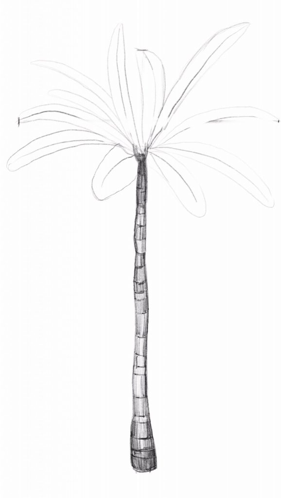 Sketch the Basic Shape of the Palm Leaves