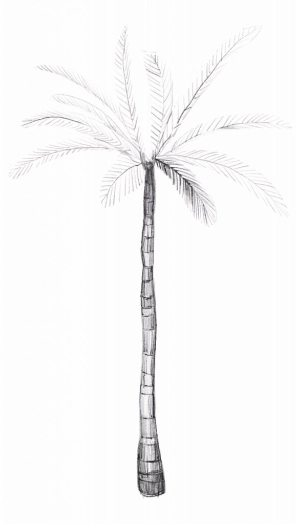 Add volume and depth to your palm leaves by darkening the individual leaf edges.