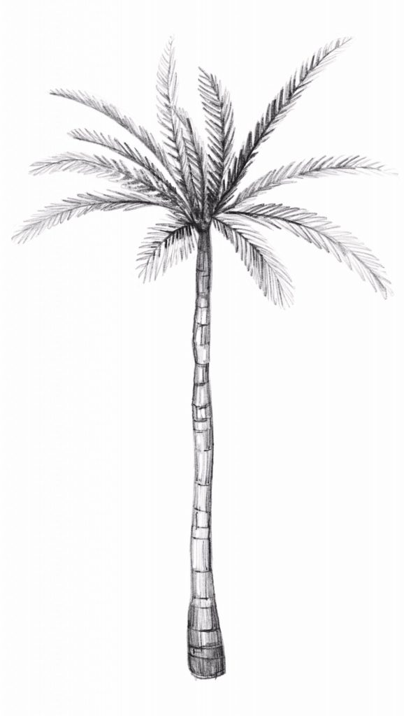 Erase all remaining guidelines from your palm tree drawing