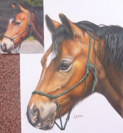 Bay Horse with Original Photo