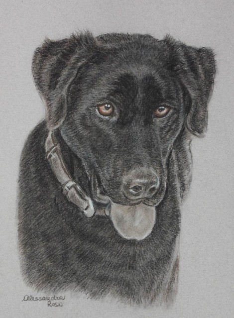 Dog Portrait - Charcoal Drawing