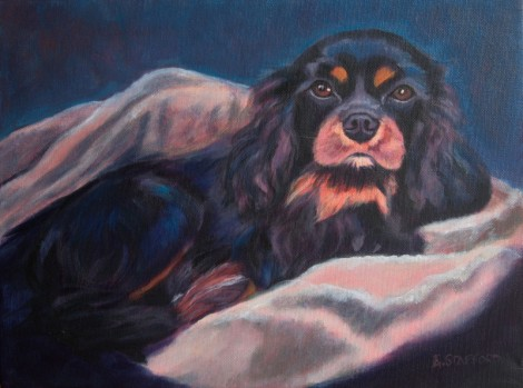 K is for King Charles Cavalier Maddie