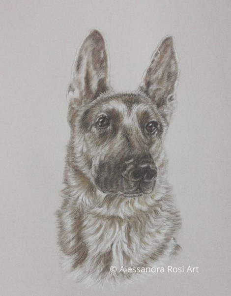 Dog Portrait - Charcoal Sepia Pencil Drawing