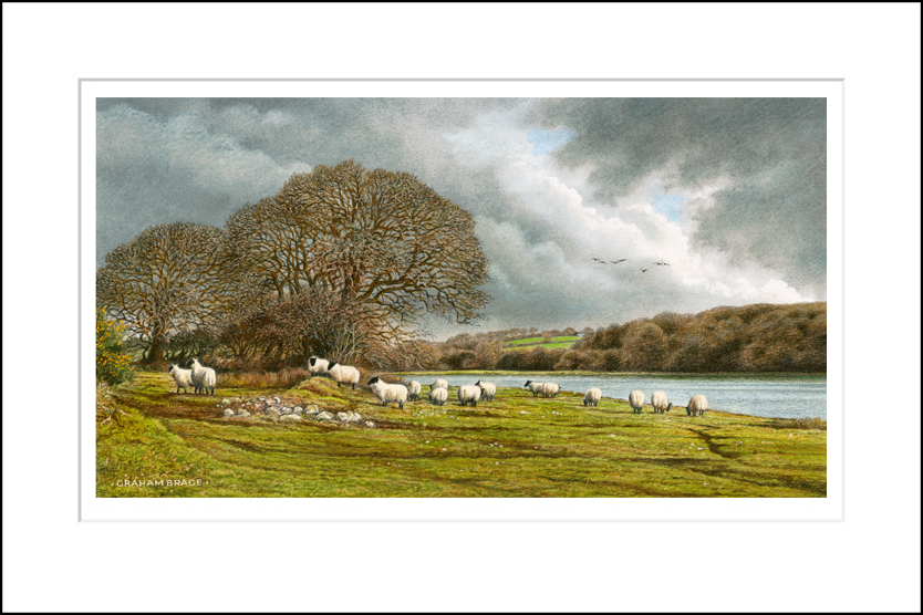 Sheep at Fowborough