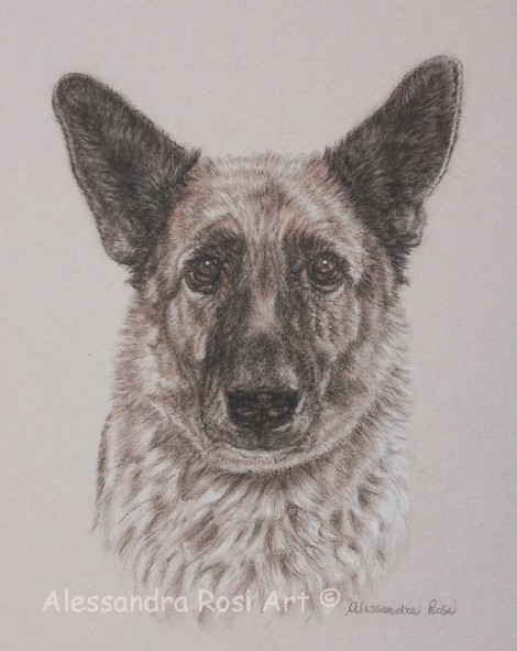 Dog Portrait - Sepia Charcoal Drawing