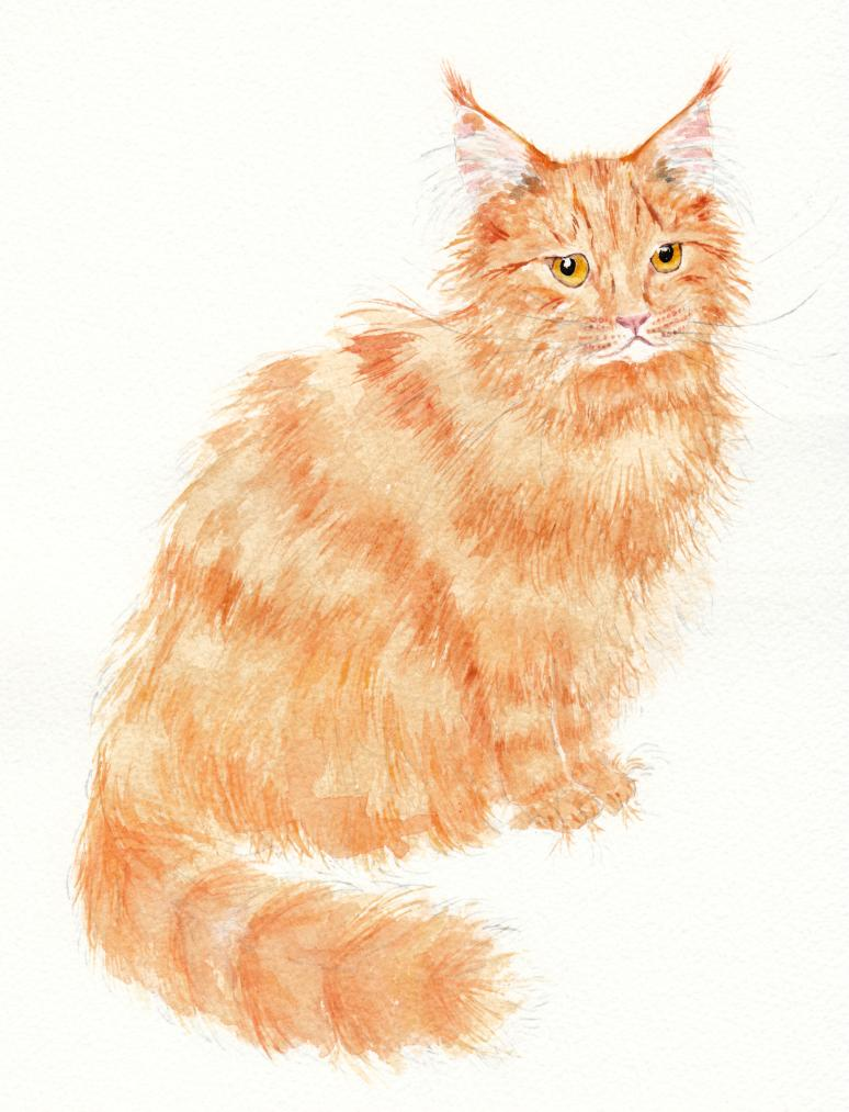 Ginger cat long haired