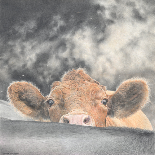 Nosey Cow