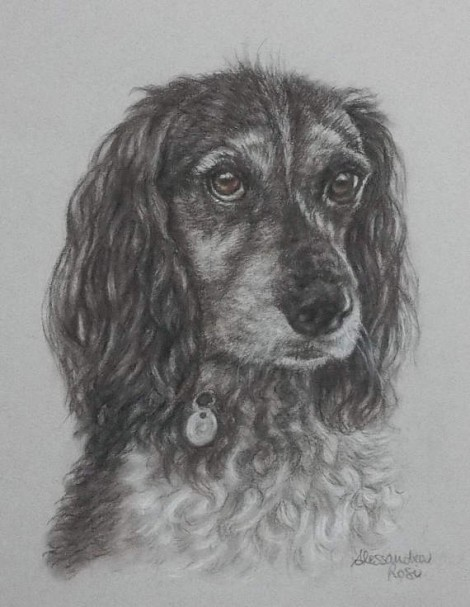 Dog Portrait - Sepia Pencil Drawing