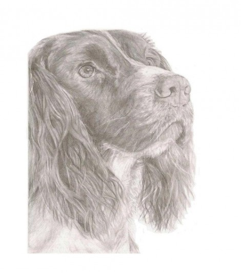 Springer Spaniel Dog Signed Print