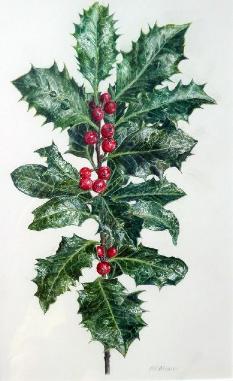Common holly