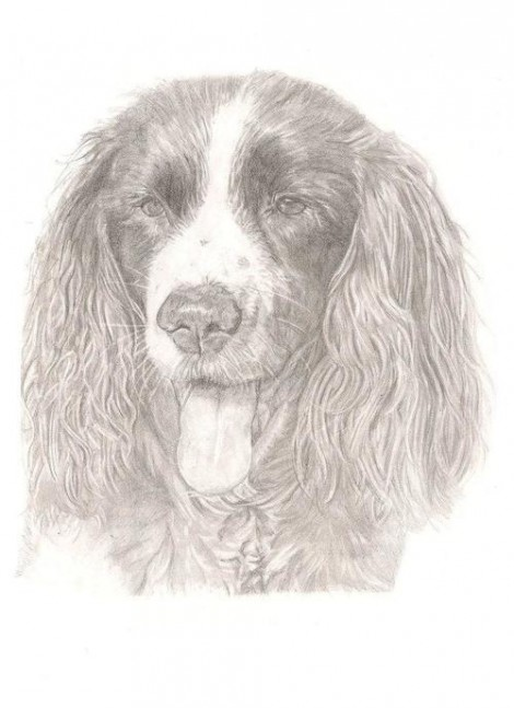 Spinger Spaniel Dog Panting Signed Print
