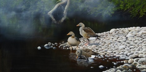 Greylags on the Towy