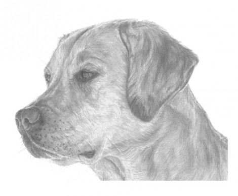 Labrador Dog Signed Print