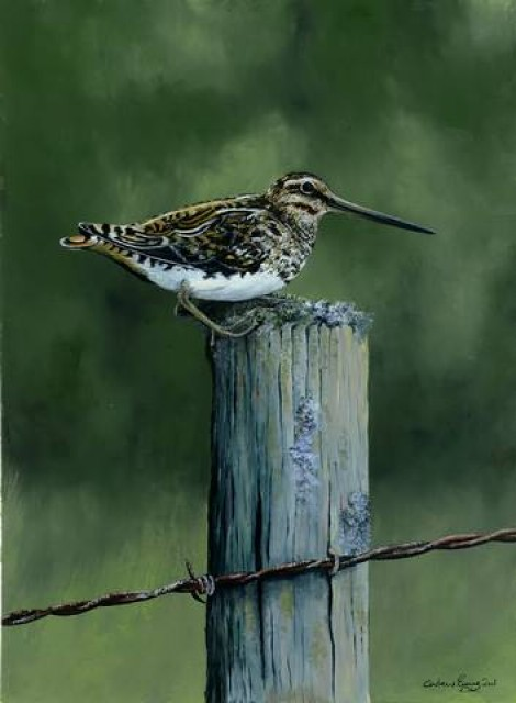 Snipe on the post