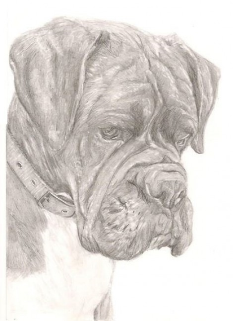 Boxer Dog Signed Print