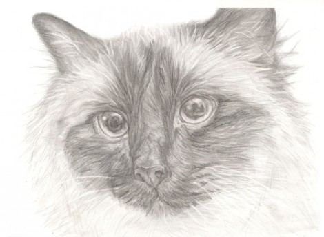 Ragdoll Cat Signed Print