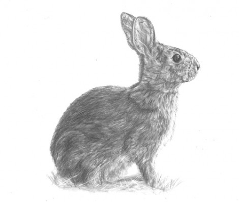 Rabbit Wildlife Signed Print