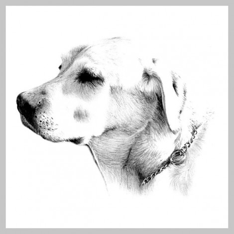 Pencil Portrait of a Dog