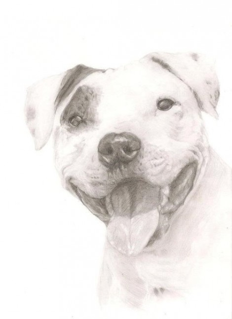 Pitbull Dog Signed Print