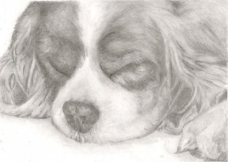 King Charles Spaniel Dog Signed Print