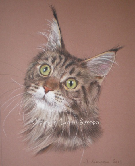 Betty - Maine Coon