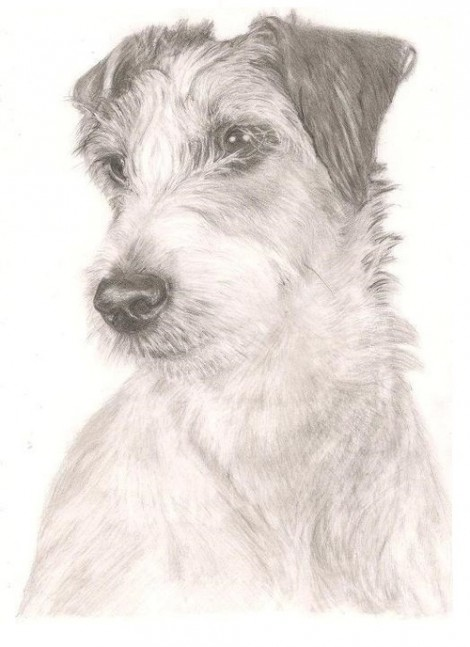 Terrier Dog Signed Print