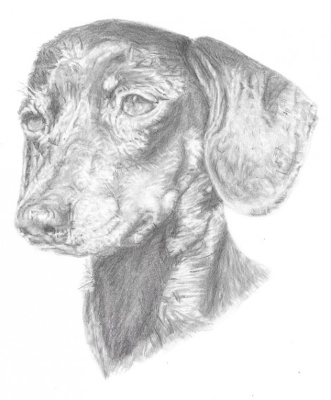 Dachshund Signed Dog Print