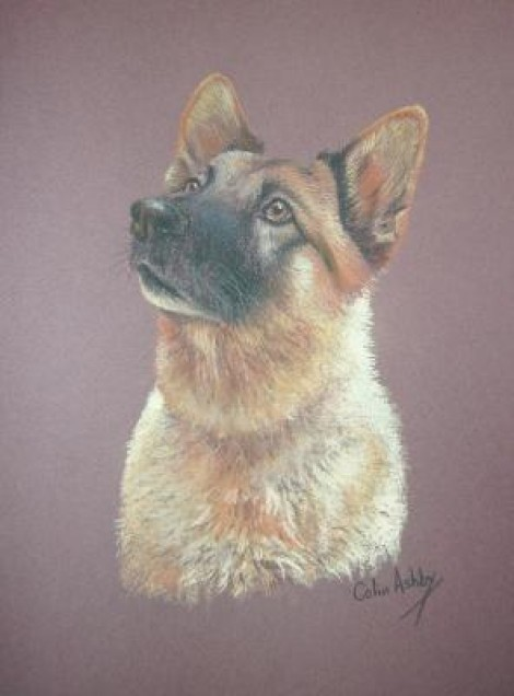 Pastel portrait of a Grman Shepherd
