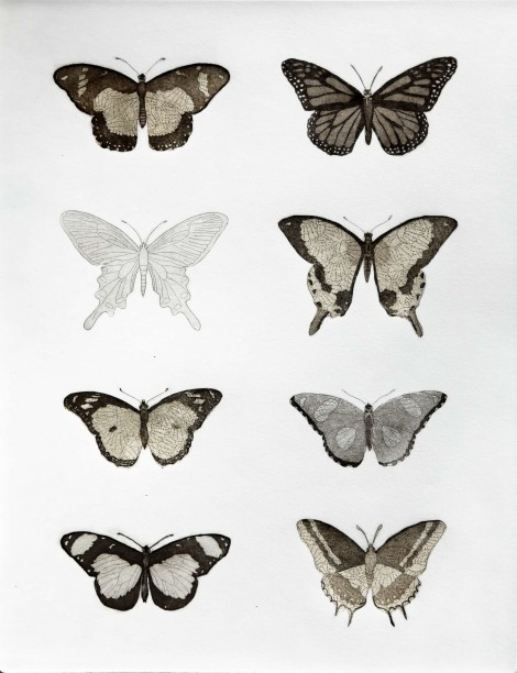Lepidoptera with golden Paper