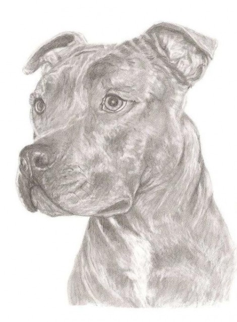 Staffordshire Terrier Dog Signed Print