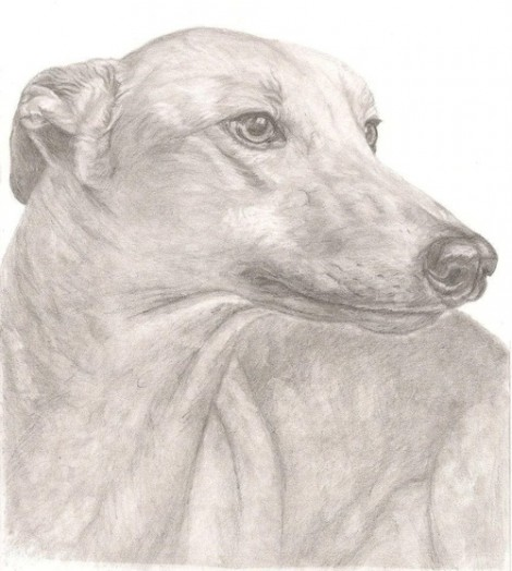 Greyhound Dog Signed Print