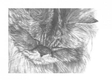 Persian Cat Signed Print