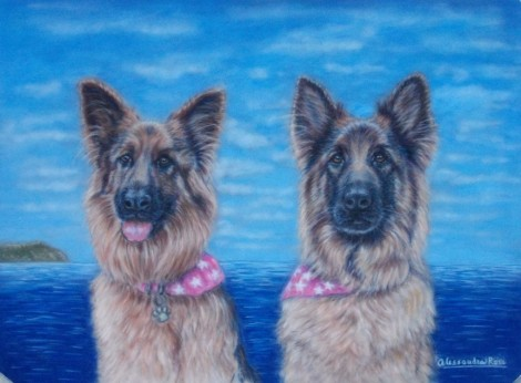 Dog portrait - Pastels