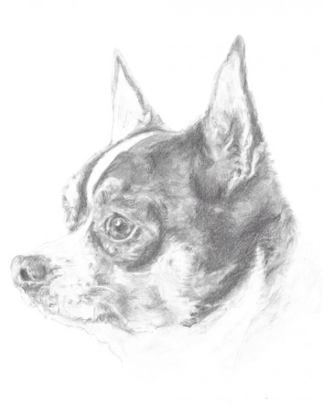 Chihuahua Dog Signed Print