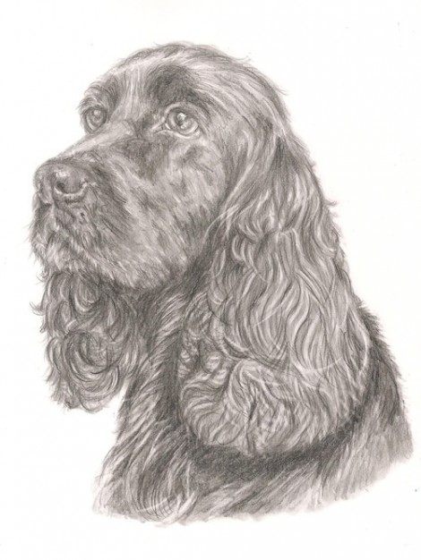 Cocker Spaniel Black Dog Signed Print