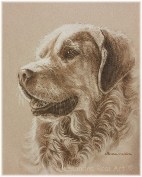 Dog Portrait - Pen and Ink Drawing