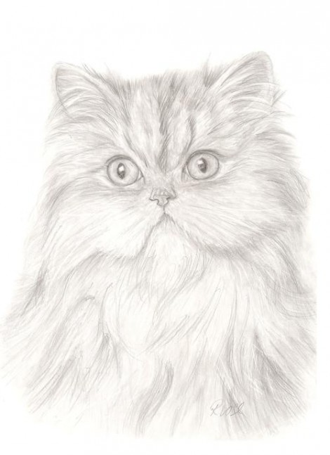 White Persian Cat Signed Print